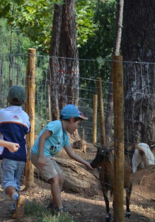 Alimentação de animais da Quinta Pedagógica