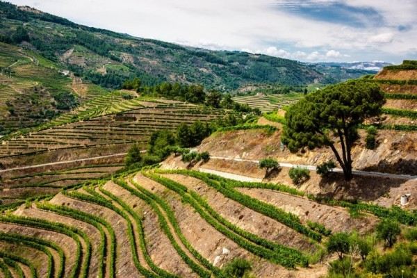 https://www.portugalplease.com/uploads/imagens/Vineyards_in_The_Douro_Valley.jpg