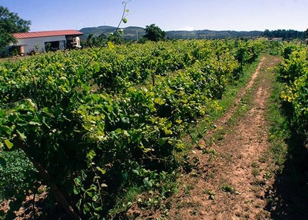 TERRAS DE CONCLAVE - AGROTURISMO ENOTURISMO 18