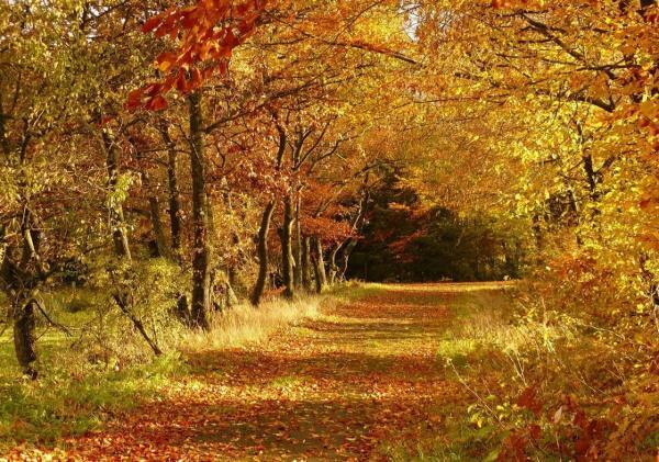 Limpeza Florestal de Terrenos e Matas