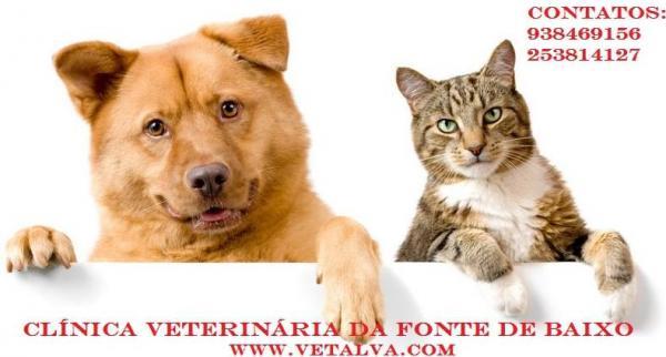 CLINICA VETERINÁRIA DA FONTE DE BAIXO
